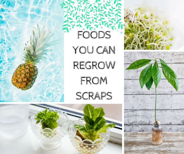 10 Fruit And Veggies You Can Actually Re-Grow From