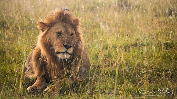 The United States has imported 1.2 million wildlife trophies from hunting safaris in less than a decade, inclusive of 5,600 lions. Cecil was but one. Xanda is now just another.