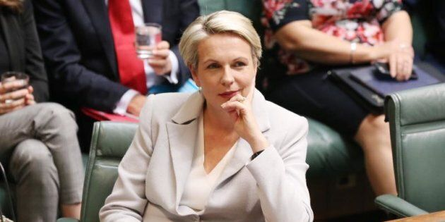 Acting Opposition Leader Tanya Plibersek says Malcolm Turnbull is desperate for