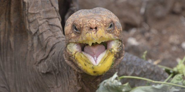 What sound do tortoise shells make when they bump together? BONK.