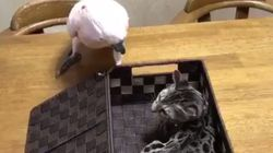 Parrot Puts Rude Cat Back In Its