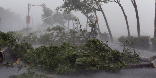 PINGTUNG, Sept. 14, 2016 -- Trees are broken by strong wind on a highway from Pingtung to Kenting in typhoon-hit Taiwan, southeast China, Sept. 14, 2016. Typhoon Meranti on Wednesday brought strong winds and heavy downpour to the island. (Xinhua via Getty Images)