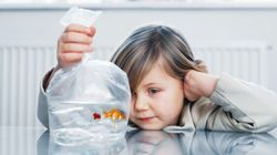 So Your Child Desperately Wants A Pet. Here's What You Need To