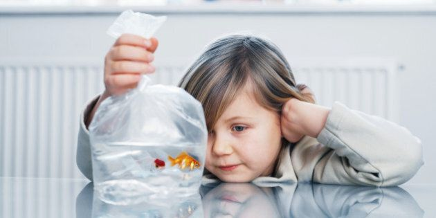 Girl (4-6) looking at two goldfish in plastic