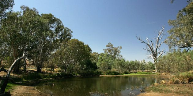 The Darling River in a typically low season. Every drop is like