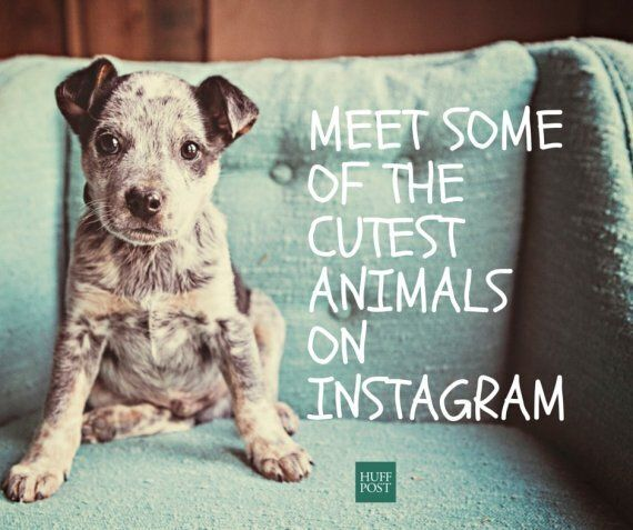 Cute Animals You Need To Follow On Instagram Right