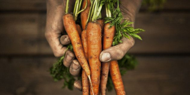 Hands holding carrot, studio