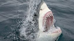 Beachgoers Could Get Shark Attack Alerts By