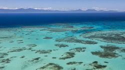 Government Must 'Do Better' To Save Great Barrier Reef, Academic
