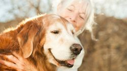 Your Fur Baby Won't Have To Live With Arthritic Pain Thanks To New Vet