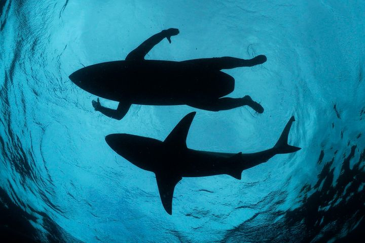 Photojournalist Thomas Peschak has no qualms about swimming with sharks.