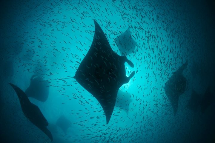 The world's oceans still have areas of incredible biodiversity.