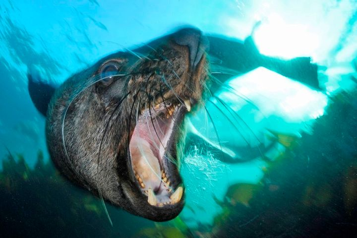 With his underwater lense, Peschak often needs to get within one metre of an animal. Sometimes closer.