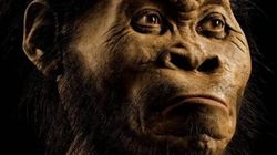 Meet Homo Naledi: Scientists Discover New Species of