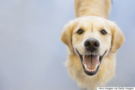 Dog Ownership Could Be Good For Your
