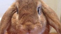 The Real Reasons We Use Bunnies & Eggs To Celebrate
