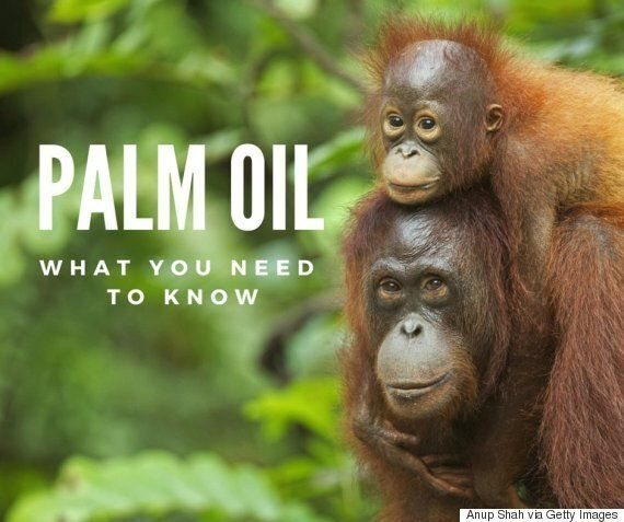 Palm Oil: Exactly Why It Gets Such A Bad