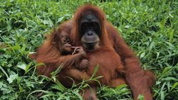 Palm Oil: The Environmental And Health Impacts, Where It's Found, And How We Can Avoid
