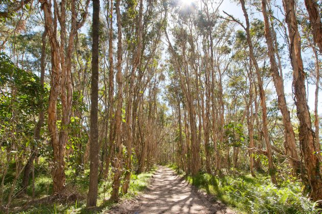 The estate is bordered by Cooloola National Park and nestled among native