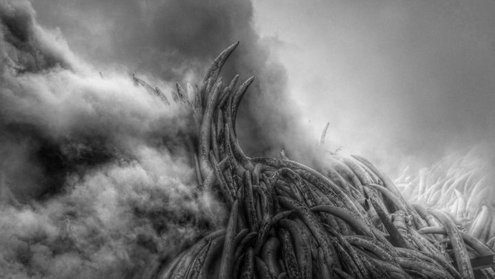 Like scenes from a mass funeral, twelve pyres of ivory and rhino horn went up in flames in front of the world's media in Nairobi. As they released billows of black smoke into the air and blanketed the city in a shroud of grief, the message was clear: ivory has no economic value.