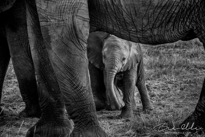 Tanzania's elephants are some of the worst affected by poaching, where populations have sustained a loss of 60% over 5 years. Many of the fallen are mothers and leave orphans behind.
