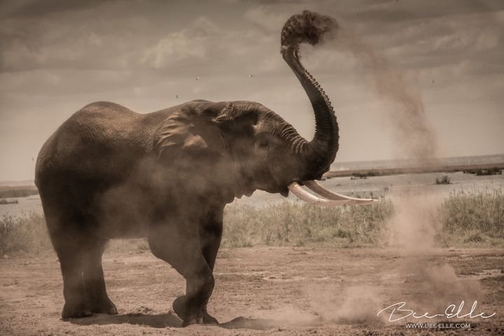 The largest market for ivory - China - has pledged to ban the trade by the end of this year.