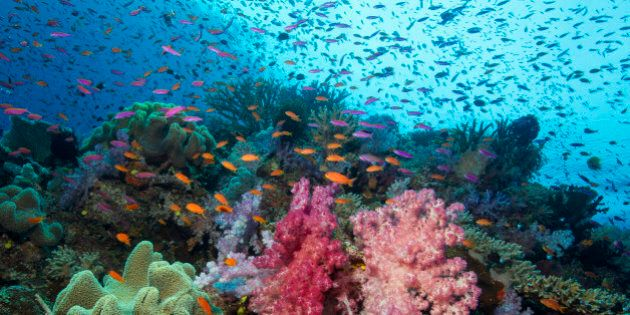 Plethora of colorful marine life on a coral reef in Fiji.