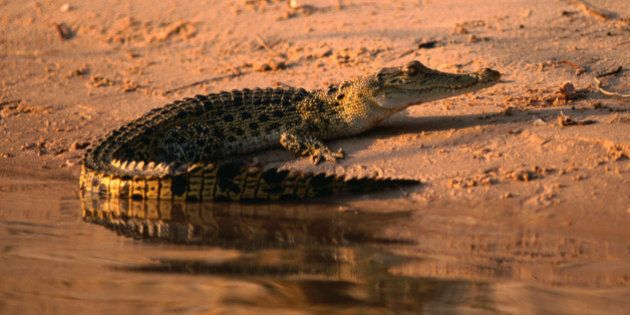Kakadu National Park, Northern Territory, Australia,