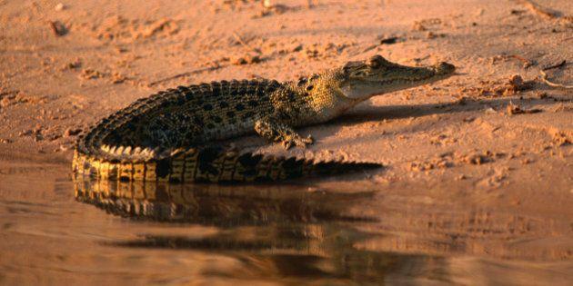 Kakadu National Park, Northern Territory, Australia, Australasia