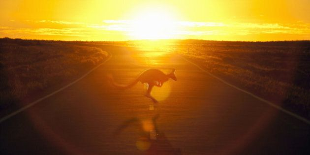 A kangaroo hops across the road against the sunset in the outback.