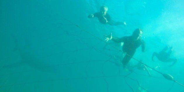 Bondi Shark Photobomb Is Fake, Says
