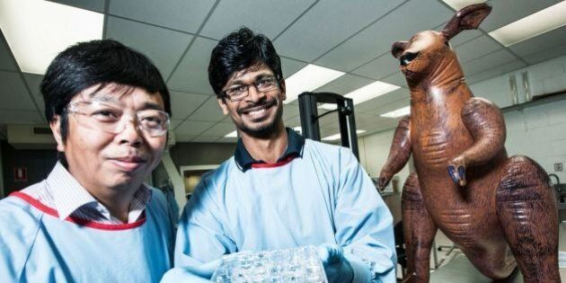 Kangaroo Cartilage Could Inspire A New Era Of Knee And Shoulder