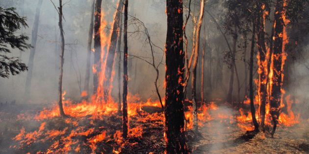 Bushfire burning trees near Ballarat, Victoria,