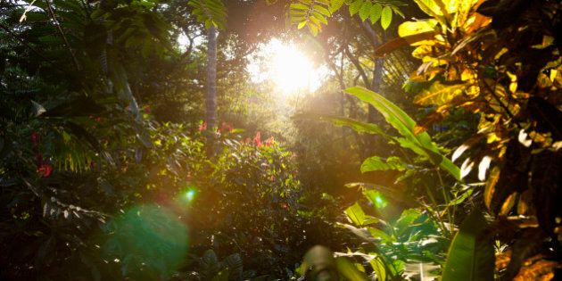 early morning in the rainforest, Costa