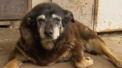 World's Oldest Dog Is Dead At