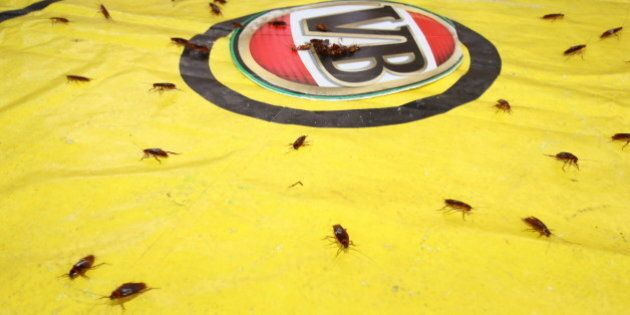 Cockroach Racing, Ride-On Mowers And Dunny Races Prove Queensland's Australia Day Celebrations Are More...