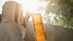 Report Finds Aussie Honey Is The World's Most Contaminated But Beekeepers