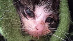 Sydney Council Wants You To Adopt A Feral Cat To Help Clean Up Strays From The