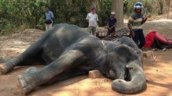 Elephant Dies Of Heatstroke After Ferrying Tourists, Prompting Global