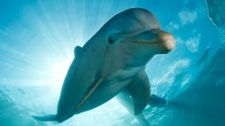 30 Years After Laws Were Passed, Captive Dolphins Are Still Put On Show In