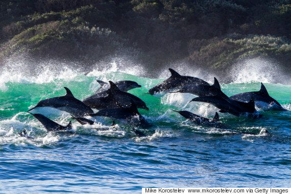 Captive Dolphin Shows Still Happen In NSW And Bob Carr Is Leading A Push To Stop It With