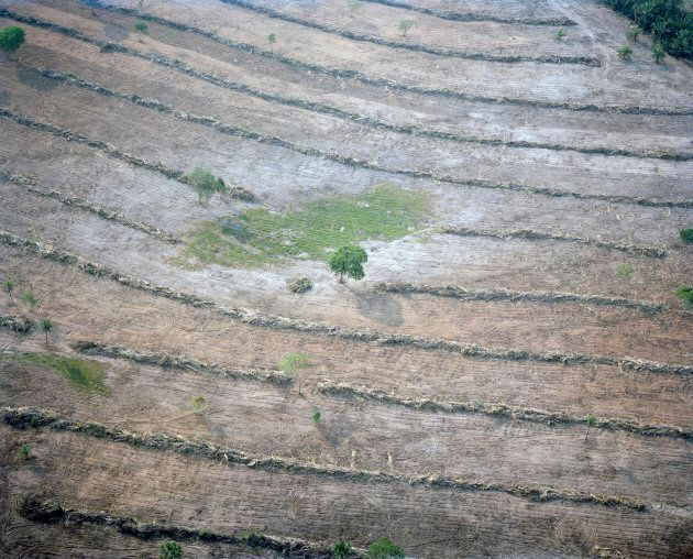 Agriculture is expanding rapidly in Brazil. In the state of Mato Grosso, home to the Pantal wetland and its headwaters, vast areas of forest have been cleared. Vital vegetation has been removed around water sources to make way for cattle farming and staple crops for export such as soy and sugar cane