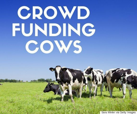 Crowdfunding Meat: 'Crowd Carnivore' Start Up Allows People To Buy Entire
