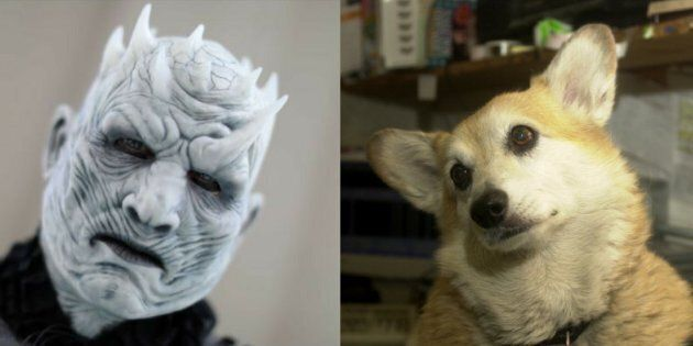 'Game of Thrones' With Corgis Is Guaranteed To Make Your Day