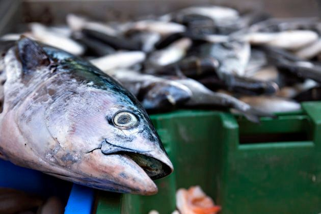 Half the world's farmed salmon are deaf -- and now a group of Melbourne researchers believe they know