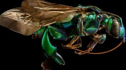 Awe-Inspiring Photos Show Just How Beautiful Insects Can