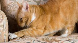 Why Your Cat Scratches Everything In