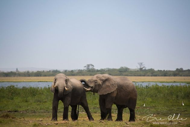 Empathetic: elephants are known to console others in