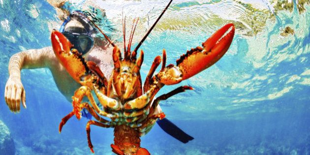 Man snorkeling and holding crayfish in the sea.