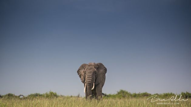 Elephants: big, beautiful and
